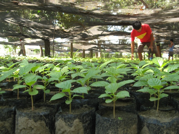 planting trees can be fun. tree nursery in San Carlos City, Negros Occidental
